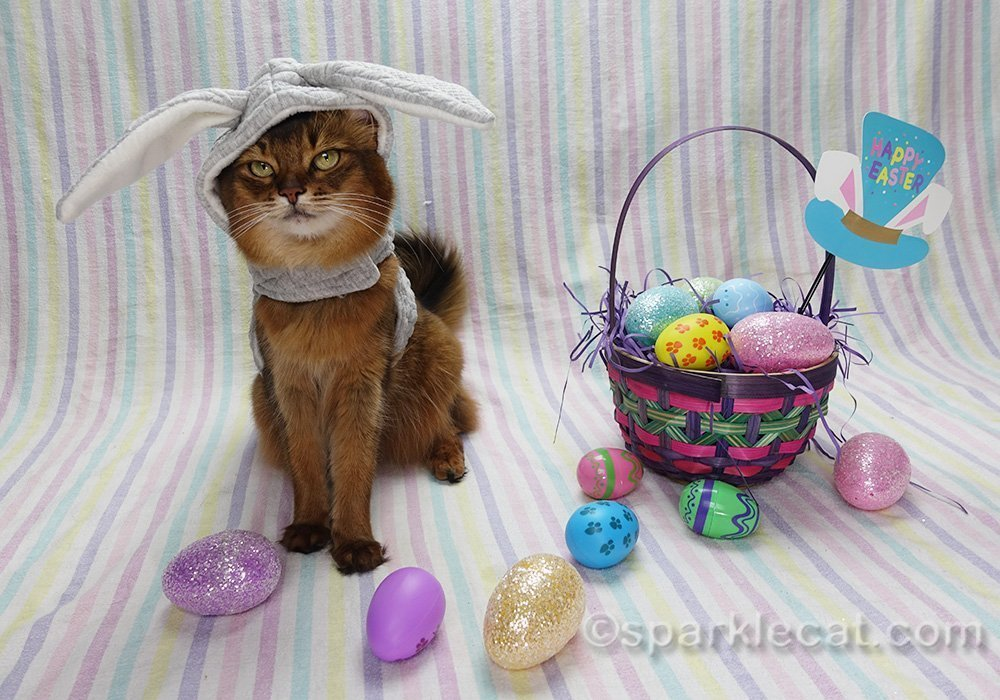 Somali cat feeling dubious about bunnycat costume