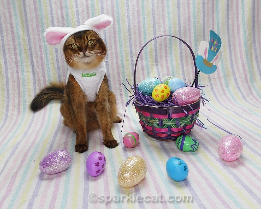 somali cat wearing different Easter bunnycat costume