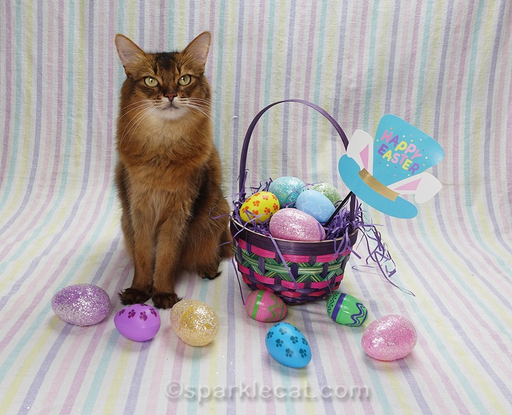 somali cat with Easter decor
