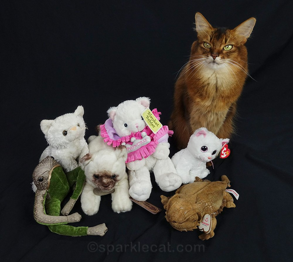 somali cat with a bunch of office stuffies