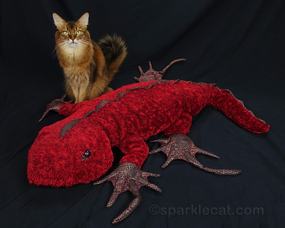 somali cat with three foot long red plush iguana