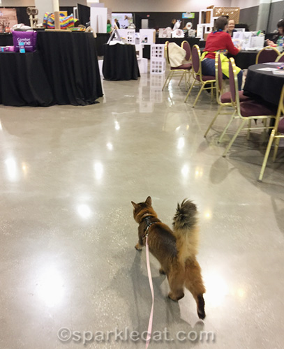 somali cat on leash, walking in BlogPaws cat lounge
