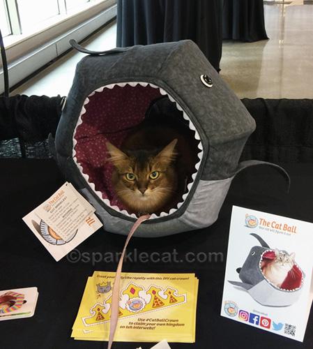 somali cat in novelty cat bed