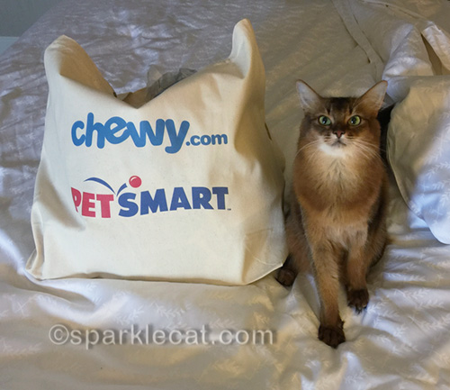 somali cat with blogpaws swag bag