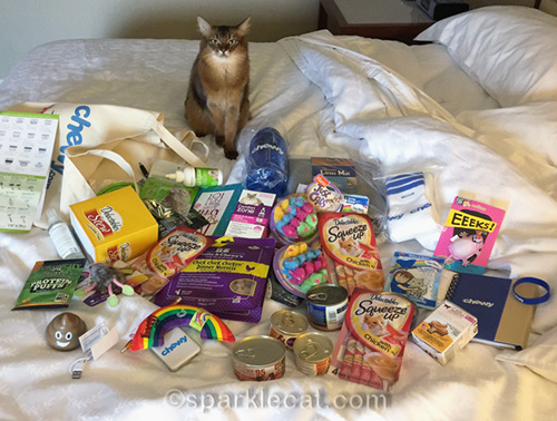 somali cat with all the blogpaws cat swag