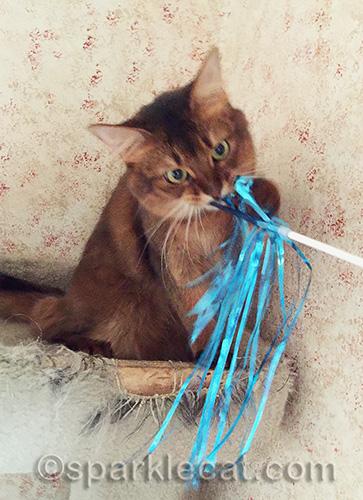 somali cat biting cat toy streamer