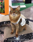 Working the BlogPaws Exhibition Hall
