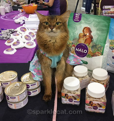 somali cat surrounded by Halo cat food and treats