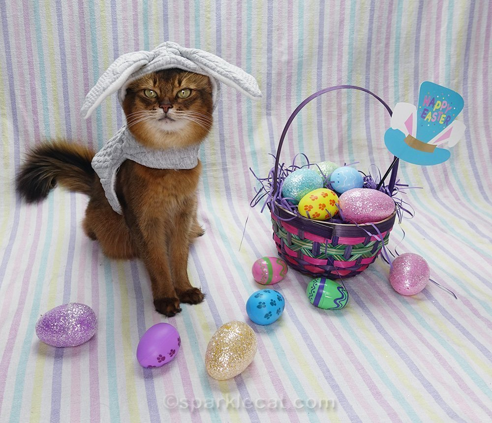 somali cat in bunny outfit, ready for Easter selfie