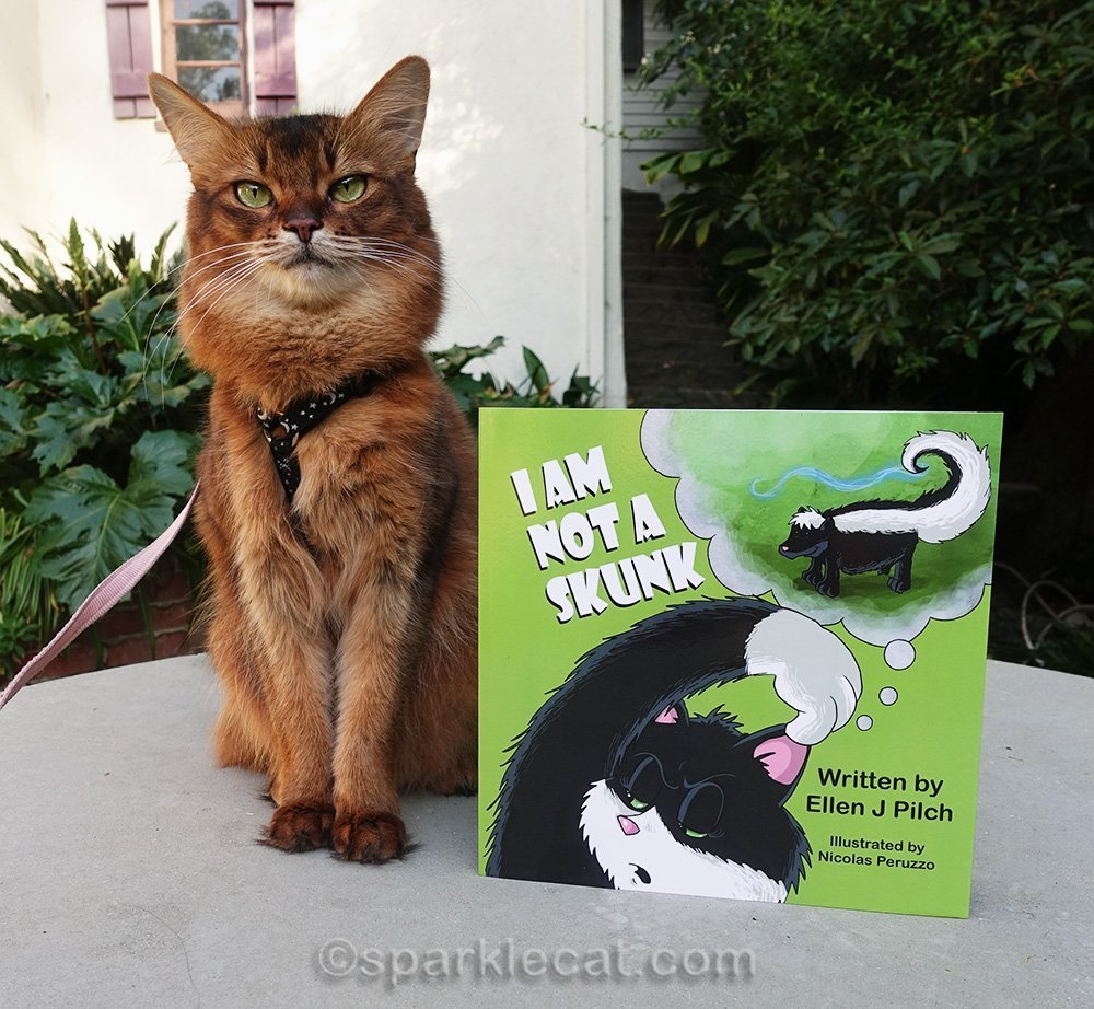 somali cat celebrating spring reading for kids with I Am Not A Skunk
