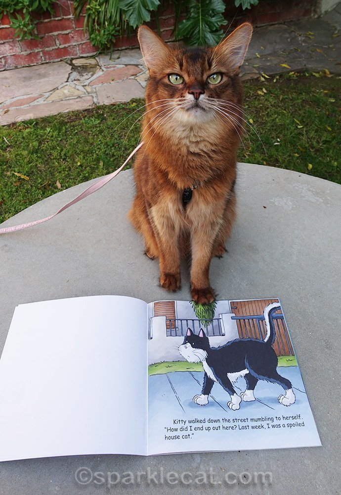 somali cat with kids book I Am Not a Skunk