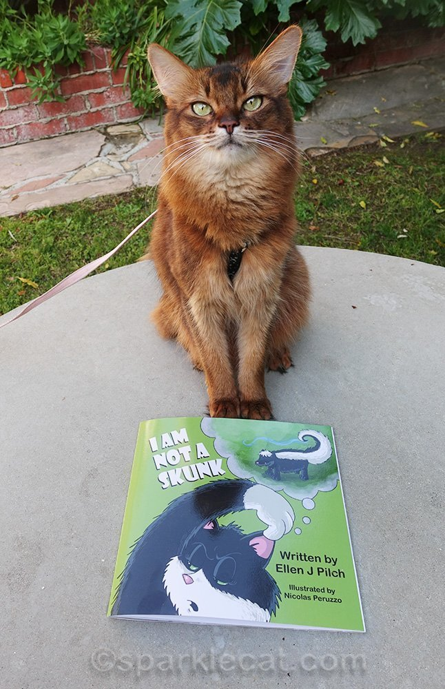 somali cat posing with a copy of I Am Not a Skunk
