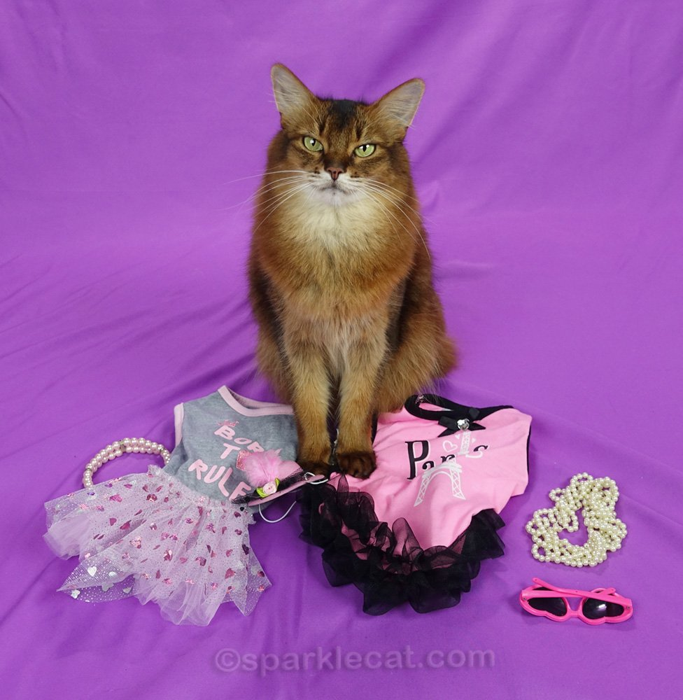 Summer points out that even cat fashion needs accessorizing, and tries to match a few things with a couple of recent dresses