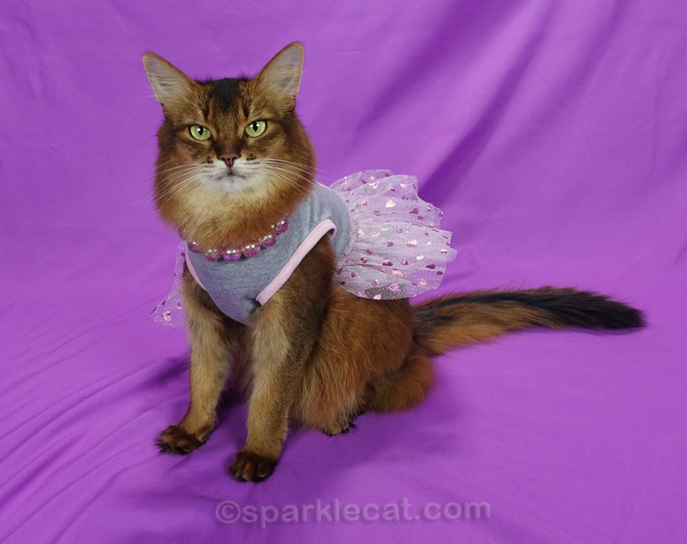 somali cat with gray dress with pink tulle skirt and irridenscent bead necklace