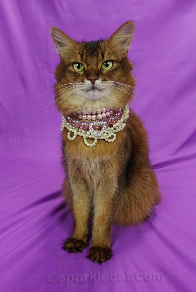 Somali cat wearing all three necklaces