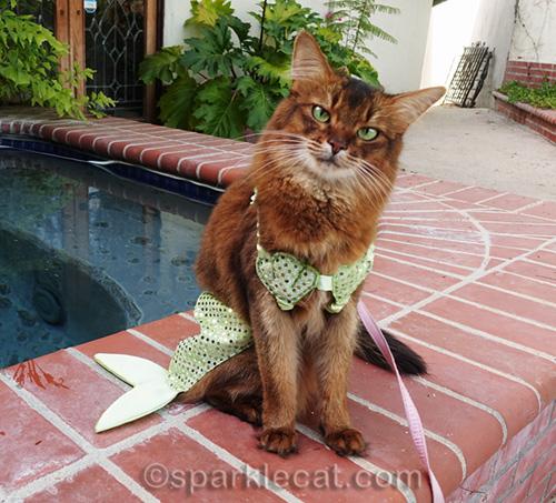 somali cat looking cute in mer-cat costume