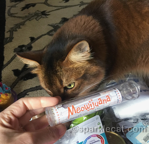 somali cat sniffing Meowijuana faux joints