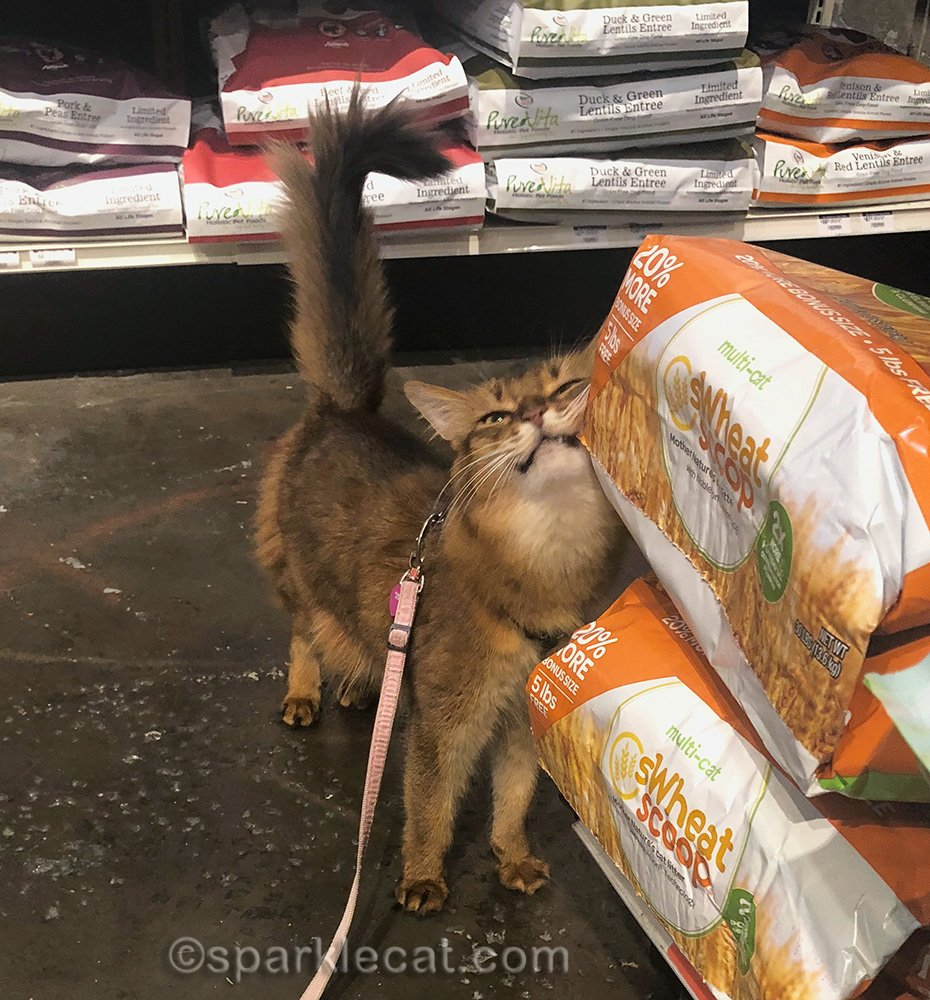 somali cat rubbing on cat litter bag