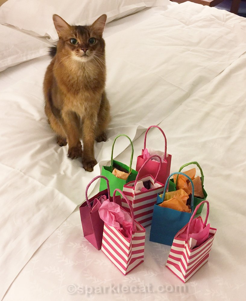 Somali cat on hotel bed with gift bags