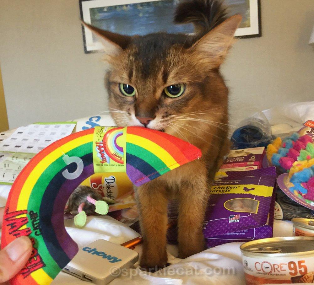 somali cat enjoying catnip rainbow and other Blogpaws swag