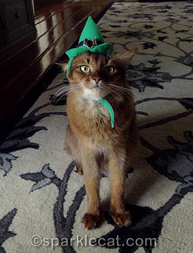 somali cat posing in elf hat