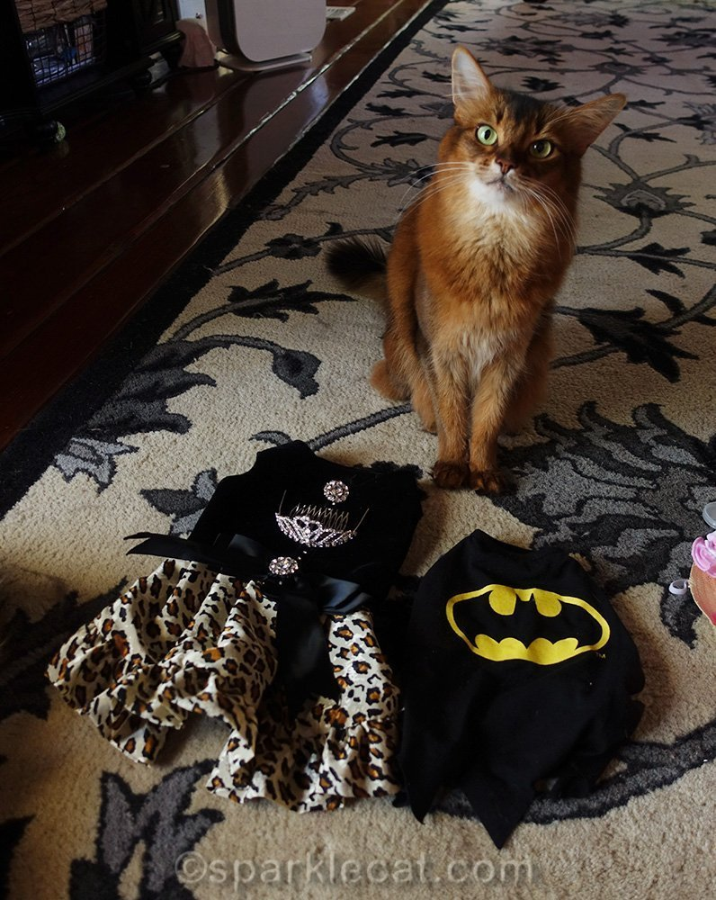 somali cat with fancy dress and Batcat costume