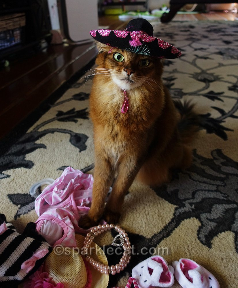 somali cat wearing sombrero