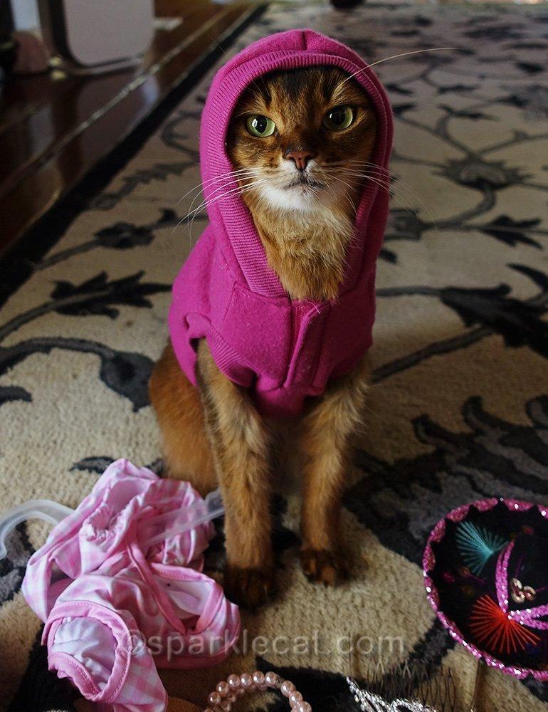 somali cat in raspberry hoodie