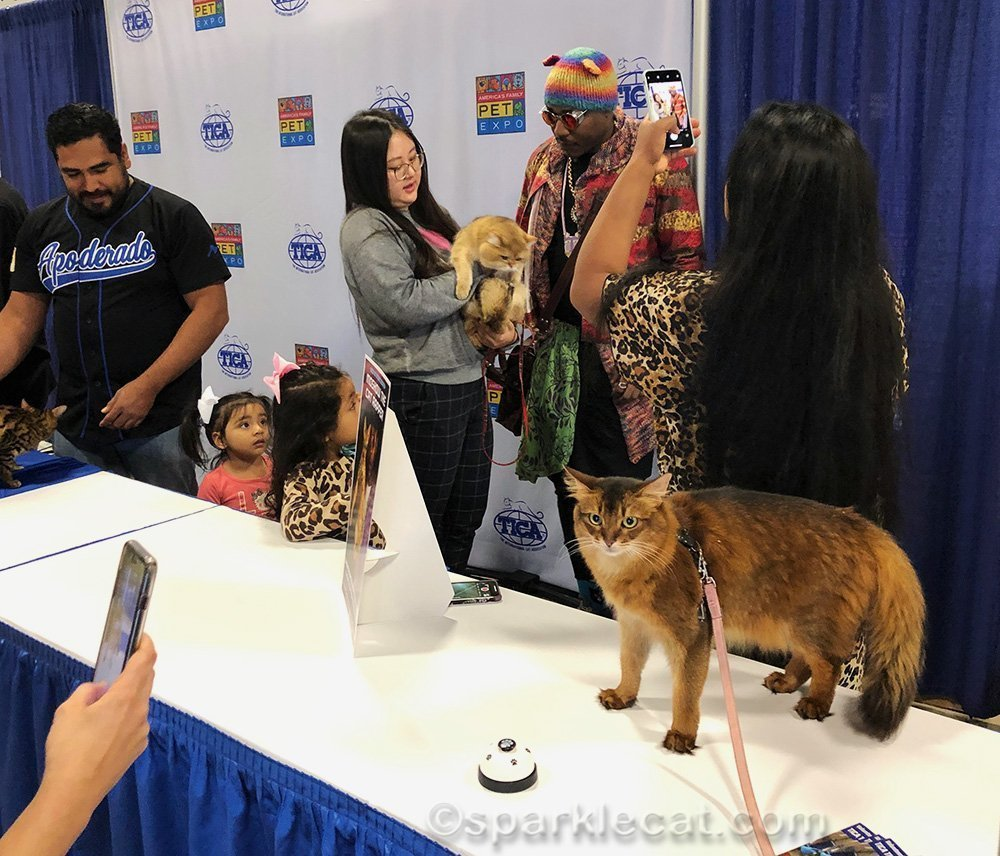 somali cat being photographed after news segment