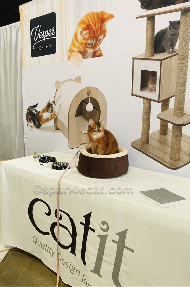 somali cat in cat bed at Catit booth