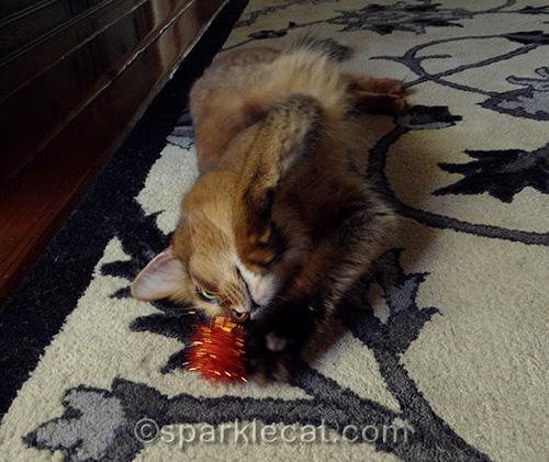 somali cat playing with orange sparkle ball