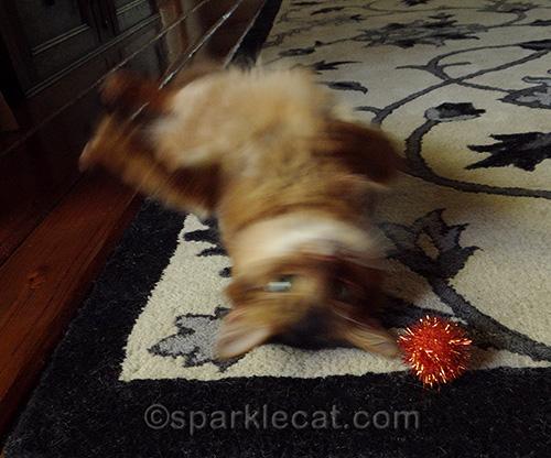 blurry Somali cat and orange sparkle ball
