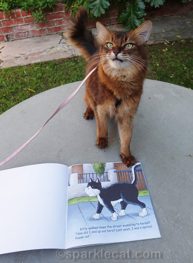 somali cat making weird face with picture book
