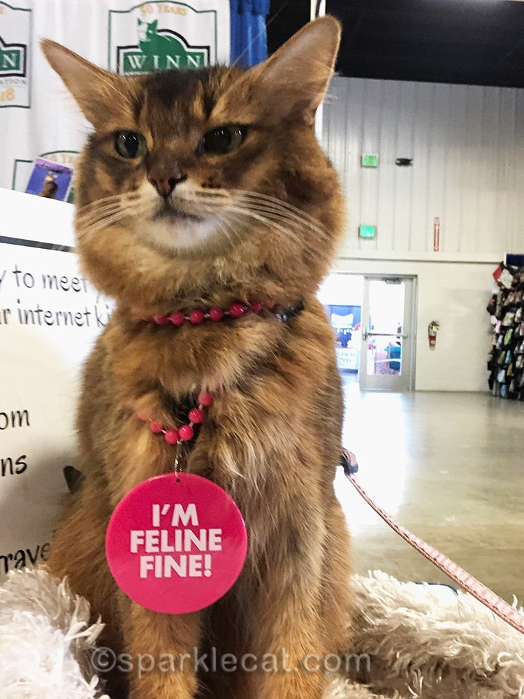 somali cat selfie outtake at the pet expo