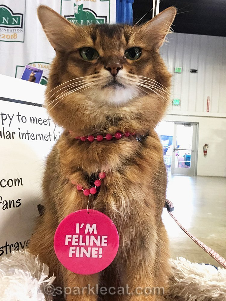 somali cat selfie with feline fine necklace