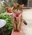 Summer visits her catnip garden, and gives a report on how it is coming along.