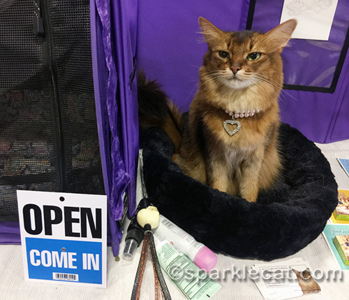 somali cat work the pet expo