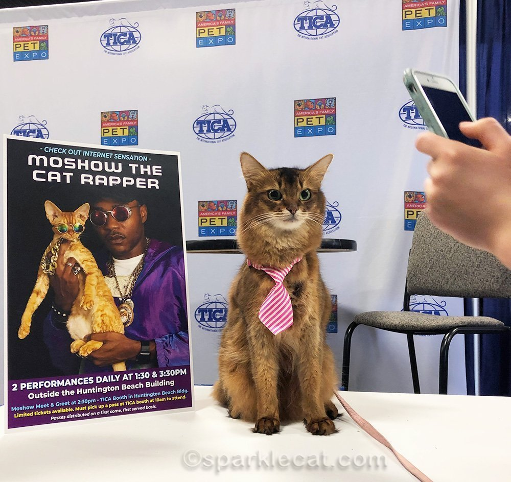 somali cat in necktie using celebrity booth for photo ops