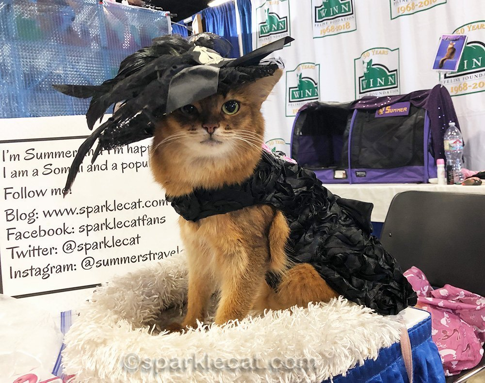 somali cat in new dress and semi-new hat, goth style