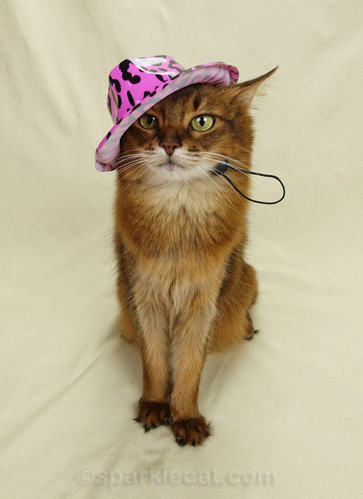 somali cat wearing 80s style hat