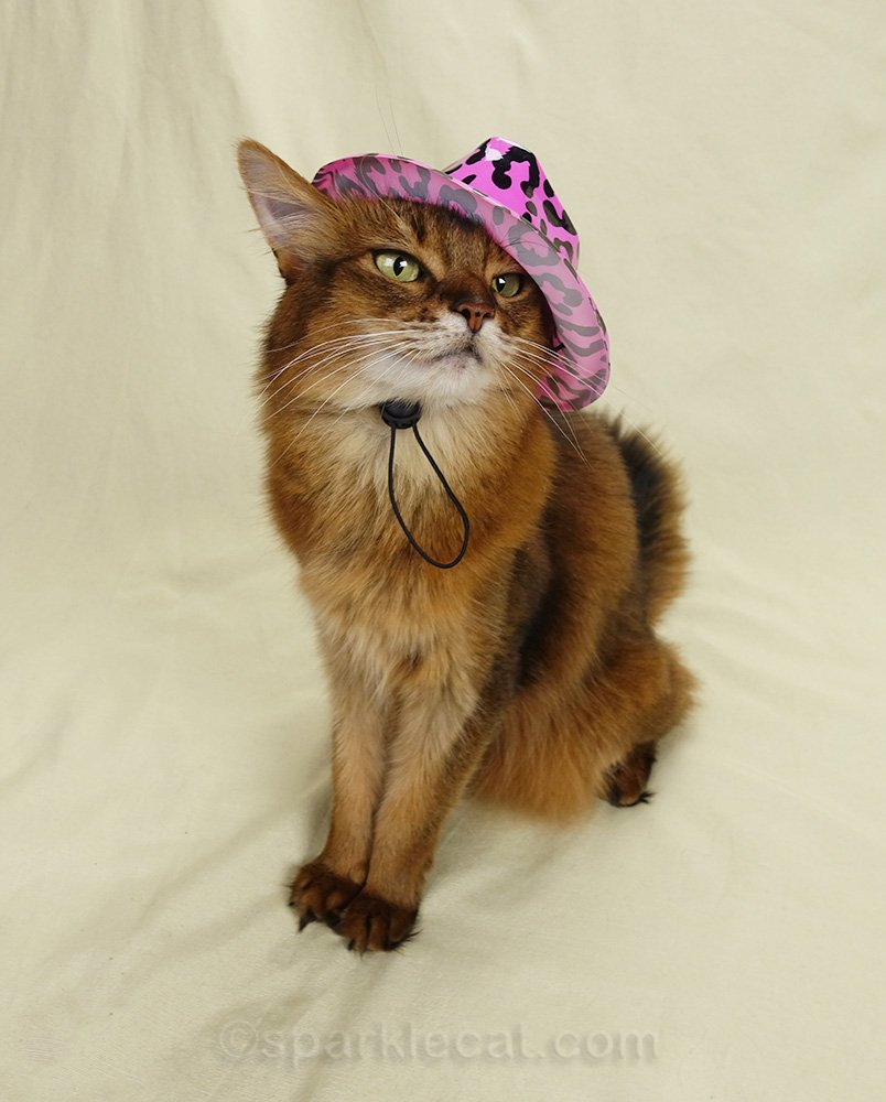 somali cat trying to wear 80s style hat
