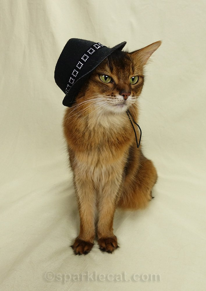 somali cat wearing fedora over one ear