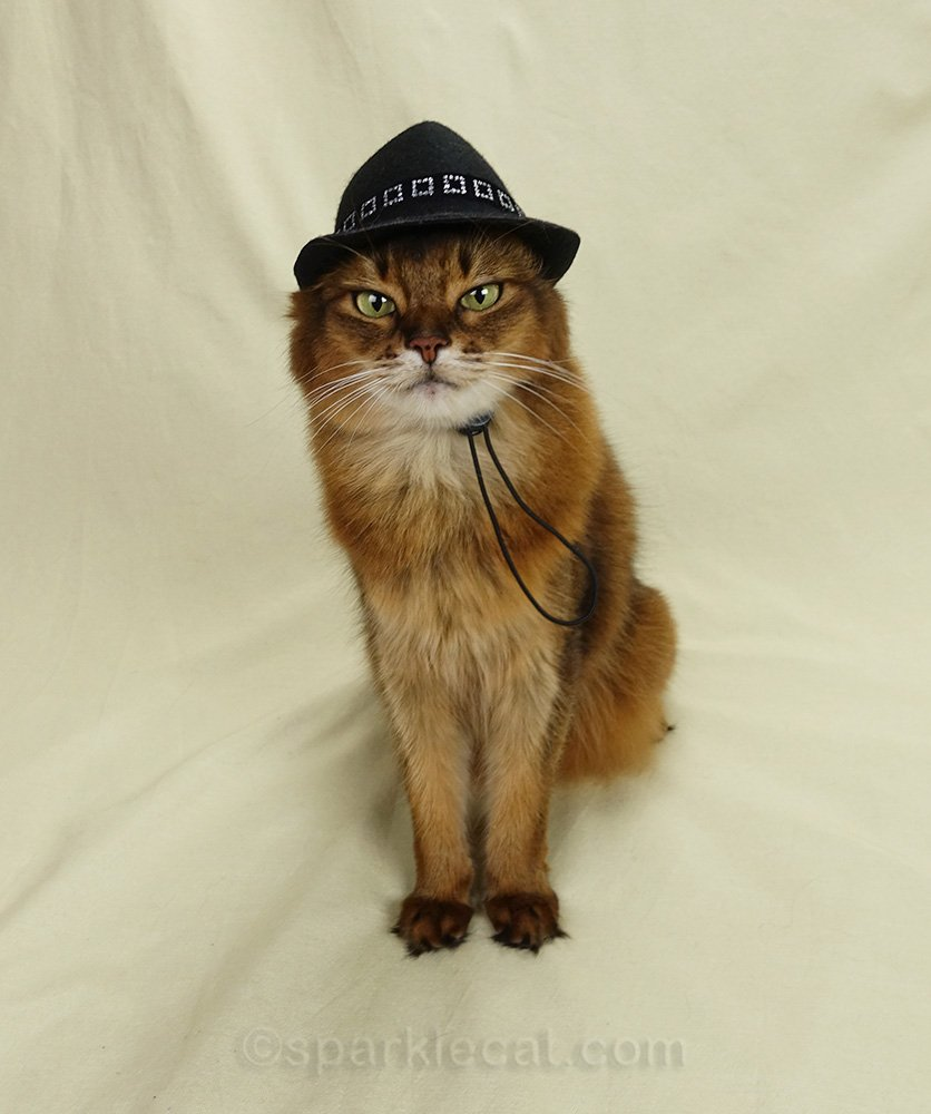 somali cat wearing fedora over both ears