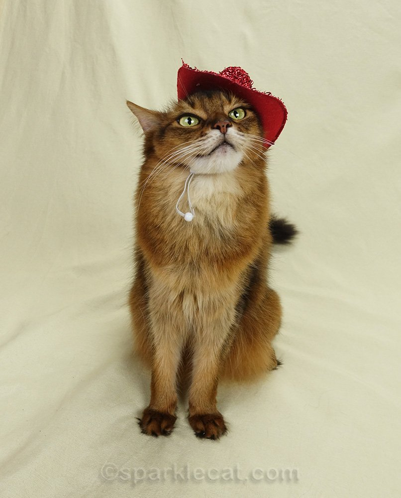 Somali cat wearing red sparkly cowboy hat