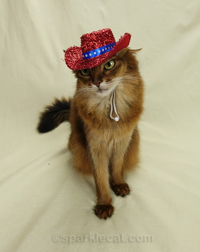 somali cat reluctantly posing red sparkly cowboy hat