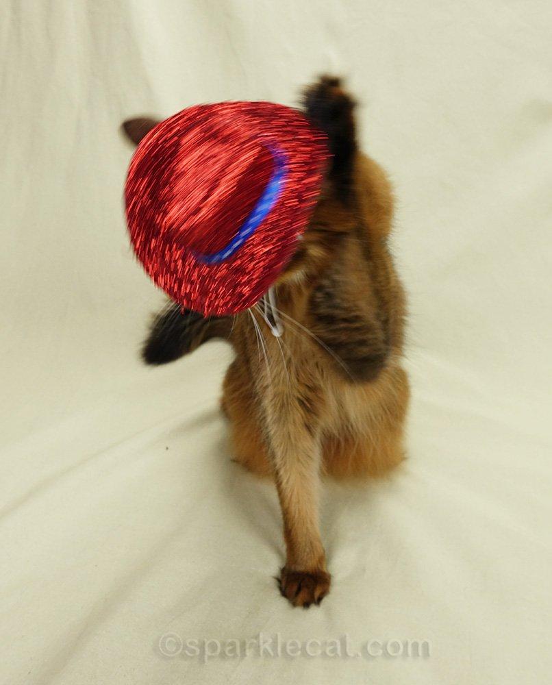 somali cat taking off cowboy hat