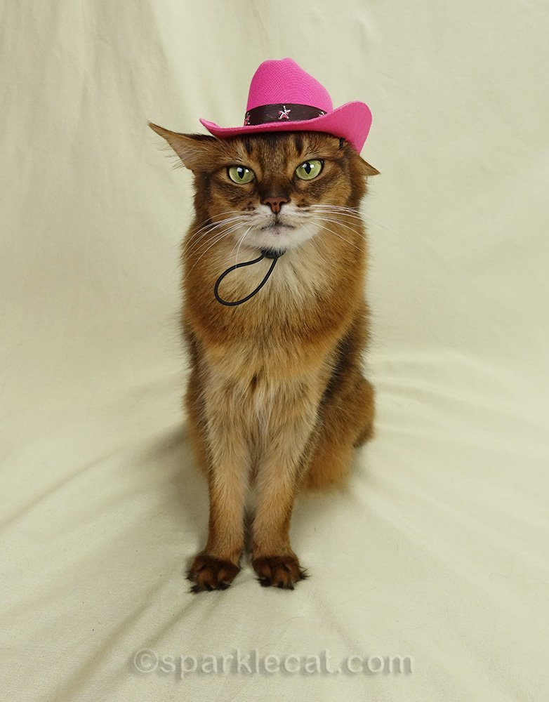 somali cat with pink cowboy hat