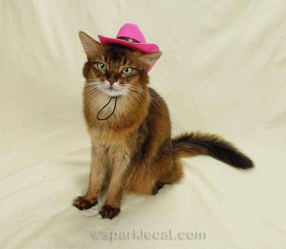 somali cat wearing cowboy hat at a goofy angle