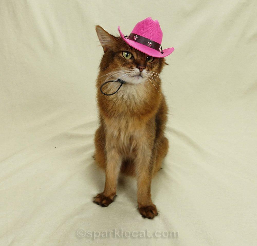 somali cat wearing cowboy hat at an angle