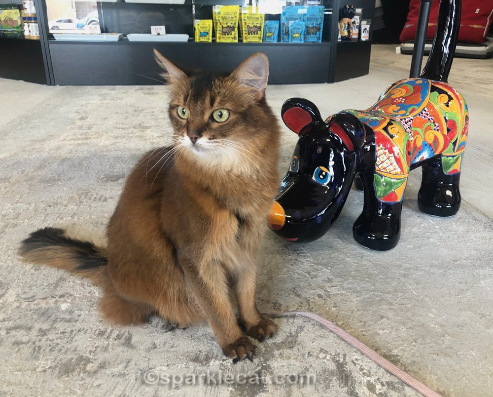 somali cat posing with mexican style ceramic dog